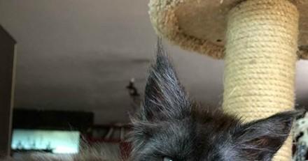 Ce chat au visage humain fait le buzz sur Internet (Vidéo)