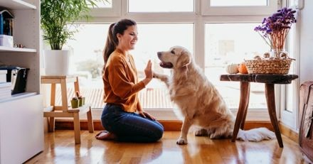 Coronavirus / covid-19 : 3 astuces pour occuper votre chien chez vous sans sortir