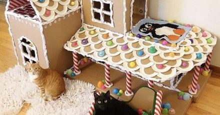 Pour que le Noël de leurs chats soit parfait, ce couple prend des mesures extrêmes !