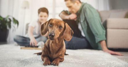 Comment faire garder son chien ou chat pendant les vacances ?