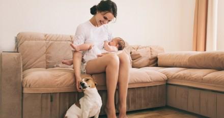 Ce chien veille sur l'accouchement de sa maîtresse !