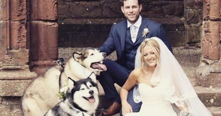 Ils font de leurs deux Malamutes les témoins de leur mariage et c'est trop mignon (Photos)