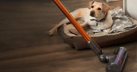 Test Dyson Cyclone V10 : l'aspirateur idéal contre les poils de chien et de chat