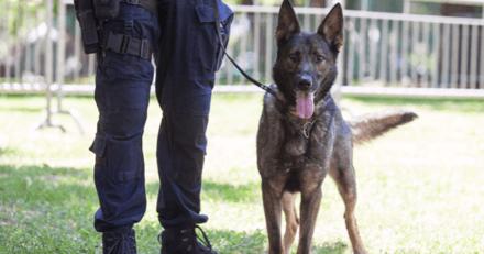 Une naissance surprise à la brigade canine de la Réunion provoque la colère d'une association locale