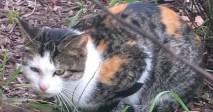 En allant au travail, elle croise un chat qui ne fait que miauler, le suit et appelle les secours