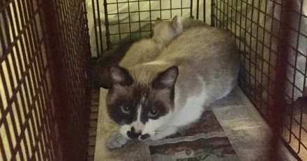 Il sauve une chatte errante, l'emmène chez le vétérinaire et comprend qu'il a fait une erreur