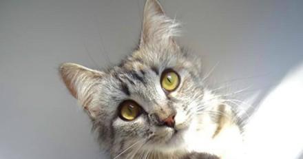 Elle croise une chatte qui réclame de l'aide et remarque un détail important