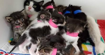 Cette chatte errante a mis au monde 11 chatons : en l'examinant, un autre détail surprend les volontaires du refuge