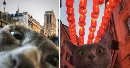 Découvrez les aventures de MaoMay, ce chat baroudeur qui voyage en Europe ! (Photos)