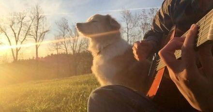 En jouant une chanson des Beatles pour sa chienne, ce musicien émeut 90 000 personnes ! (Vidéo)