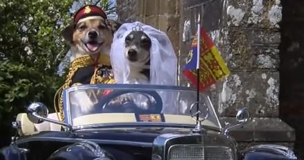 Elle recrée le mariage du prince Harry et de Meghan Markle avec ses chiens !