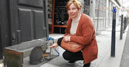 Le chat Marius, coincé dans un appartement, a pu être libéré par les pompiers