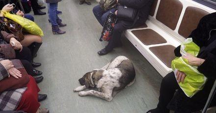 New-York : un chiot disparaît après avoir été perdu dans le métro