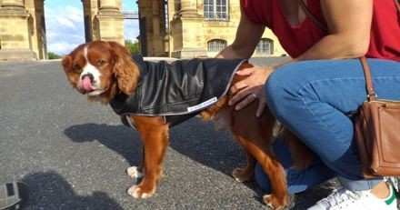 Zéro déchet : des manteaux pour chiens fabriqués à partir de vieux vêtements usés ! (Vidéo)