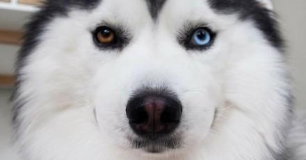 Vous allez vouloir faire un gros câlin à ce chien très poilu !