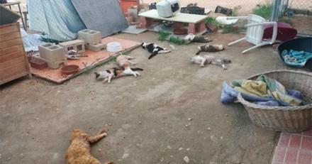 Barbarie en Espagne : il entre dans un refuge et massacre 9 chats