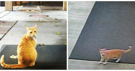 Ce chat voulait juste entrer dans une bibliothèque, il est devenu une star !