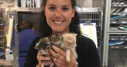 Ces 14 chatons avaient désespérément besoin d'aide, elle devient leur famille d'accueil à tous