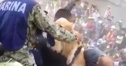 Après le séisme au Mexique , la vidéo du sauvetage d'un chien émeut