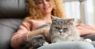 Tout ce que vous devez savoir avant d'acheter un chat de race (ou non) !