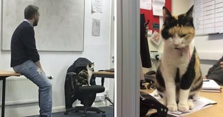 Cette chatte est la meilleure enseignante de l'université !