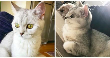 En passant devant un miroir, ce chat découvre qu'il est un chat et sa réaction est géniale (Vidéo)
