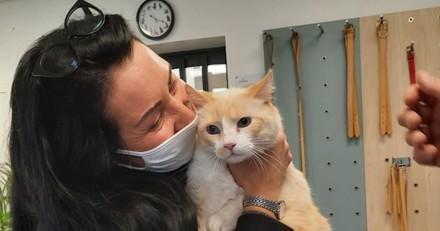 Le refuge SPA récupère un chat errant : le vétérinaire fait une découverte qui va tout changer