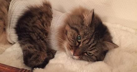 Hommage à Mira, petite chatte férale
