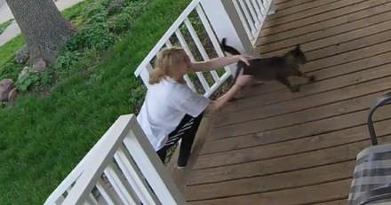 Ce chat était en train de se faire kidnapper… mais il en avait décidé autrement ! (Vidéo)
