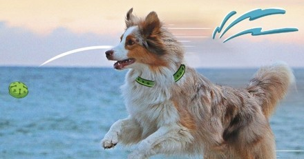 Mois de la mobilité : ne laissez pas votre chien s'engourdir pendant le confinement !