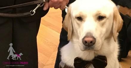 Aidez Monty, le 1000ème chien guide, à devenir un merveilleux compagnon pour la vue !