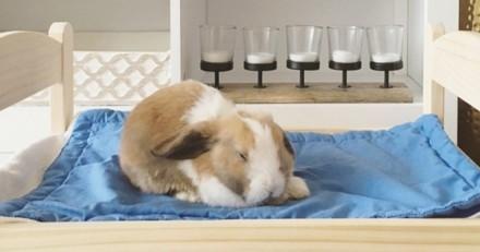 Cet adorable lapin nous fait découvrir sa maison aménagée sur mesure