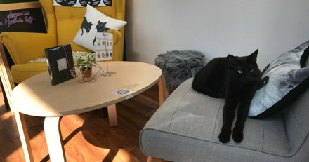 Dans ce café parisien, vous pouvez boire, manger et… adopter un chat !