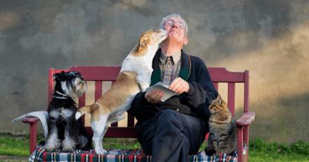 Espérance de vie des chiens et des chats : nos animaux vivent-ils plus longtemps ?