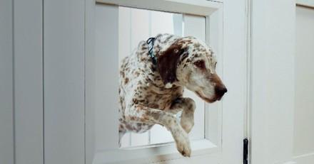 CES 2021 : Une porte connectée pour permettre à votre chien d'aller et venir à sa guise