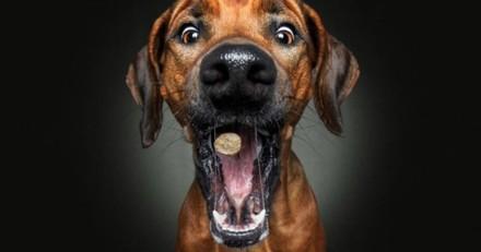 Ces photos de chiens bondissant pour attraper des friandises vont vous en mettre plein les yeux