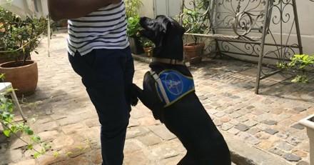 Un malvoyant se fait agresser par un voleur, son chien guide le défend