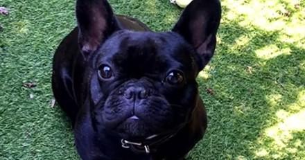 Il jette un chien du 4e étage d'un immeuble : la justice décide de le laisser en prison