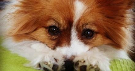 Lettre ouverte aux (futurs) propriétaires de chiens