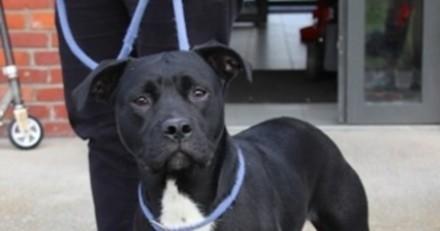Un homme entre dans le refuge avec son chien qu'il veut abandonner : son explication est 'à vomir'