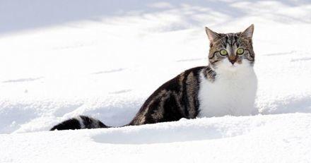 Comment renforcer le système immunitaire de son chat pendant l'hiver ?
