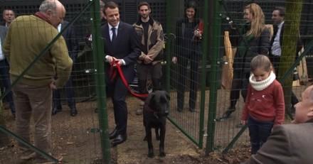 La drôle de rencontre entre Nemo, le chien des Macron, et ses nouvelles colocataires à l'Elysée (Vidéo)