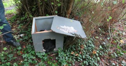 Cueillette aux champignons : un homme voit une niche abandonnée, ce qu'il y a dedans lui glace le sang