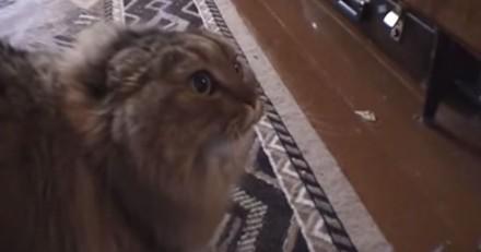 Le No No No No Cat, un des premiers chats stars d'Internet, est mort