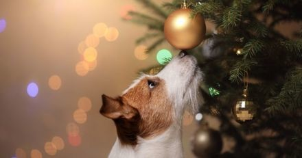 3 idées pour inclure votre chien lors des festivités de Noël