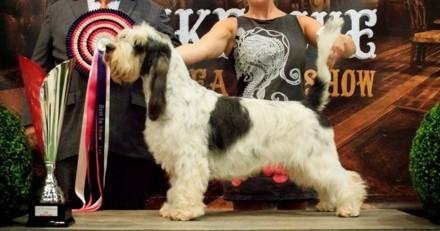Retour sur le North Sea Dog Show, la première exposition internationale de Dunkerque