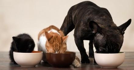 Le plaisir de bien manger chez le chien et le chat, c'est quoi ?