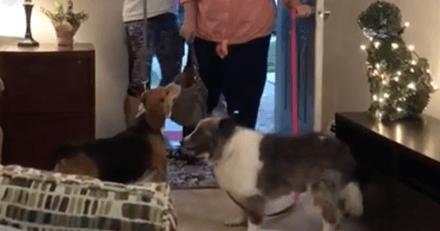 Obligée de vivre dans sa voiture avec ses chiens à 70 ans, cette femme a eu la surprise de sa vie !