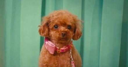 Le chien de Katy Perry aux devants de la scène dans son nouveau clip « Small Talk »