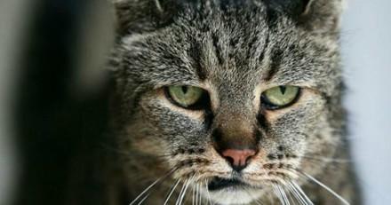 Le chat le plus vieux du monde est décédé